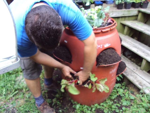 Garden in a barrel David Newland